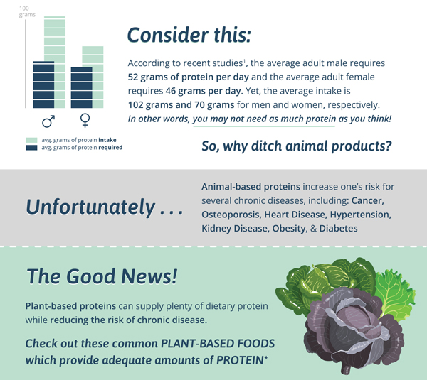 Wholesome Protein Infographic